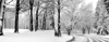 Landscape road,Forest,Snow,Trees